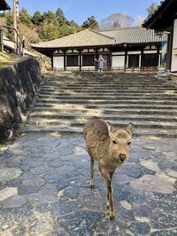 奈良の旅 4  東大寺二月堂 - FK's Blog