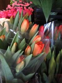 GATE FLOWER FIELD * お花屋さんは春色満載♪ - ぴきょログ~軽井沢でぐーたら生活~