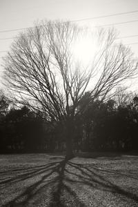 bright sunny day - S w a m p y D o g - my laidback life