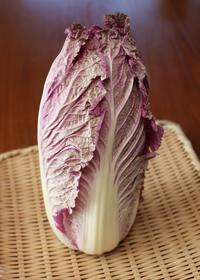 鮮やかな白菜 - 宙吹きガラスの器
