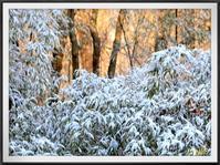 雪の朝 - キルトとステッチ時々にゃんこ