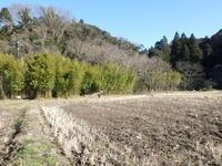 ウスタビガのマユ - 千葉県いすみ環境と文化のさとセンター
