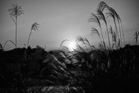 evening(3cut) -     ~風に乗って~    Present