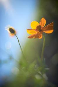 flower -     ~風に乗って~    Present