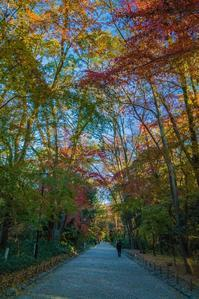 2020京都紅葉~糺の森 - 鏡花水月