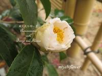 冬の雨に咲く椿 - 風と花を紡いで