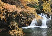 明日香稲渕飛鳥川紅葉 - 魅せられて大和路
