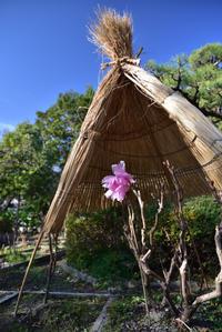 石光寺から竹内街道を行く - 無垢の木の家・古民家再生・新築、リフォーム 「ツキデ工務店」