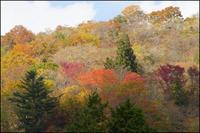 茶臼山高原~3 - 薫の時の記憶