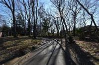 小平中央公園寒い朝 - ひのきよ