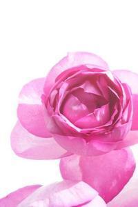 アトリエ始動、花仕事始め(^^♪ - お花に囲まれて