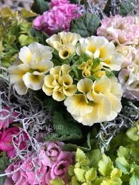 プリムラは春の予感 - Gardener*s Diary