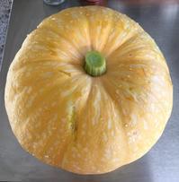 パンプキン料理いろいろ/ Cooking With Yellow Pumpkin - アメリカからニュージーランドへ