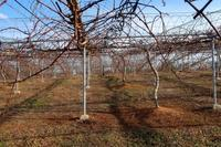 暖かい葡萄園 - ~葡萄と田舎時間~ 西田葡萄園のブログ