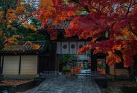 2020京都紅葉~今宮神社 - 鏡花水月