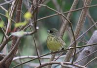 K山公園にて - 写真で綴る野鳥ごよみ