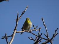 近所で出会った鳥たち - 絵を描きながら