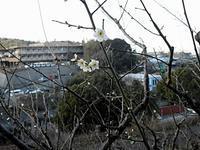 久しぶりのウォ―キング - さ・ん・ぽ道