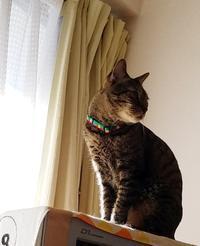 逆光 - キジトラ猫のトラちゃんダイアリー