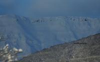 山の様子と動物の足跡 - 標高480mの窓からⅡ