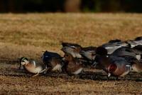 見沼自然公園 2021.1.14 - 鳥撮り遊び