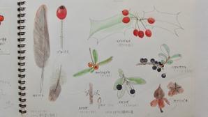 #ネイチャー・スケッチ #Naturejournal #sketch #Watercolo #水彩画 #植物 #羽 -