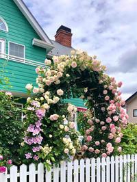 つるバラの誘引剪定♡最後はやっぱりアーチのピエールドゥロンサール♫ - 薪割りマコのバラの庭