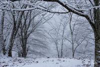 雪が降った朝1 - toshi の ならはまほろば