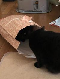 紙袋猫 - 愛犬家の猫日記
