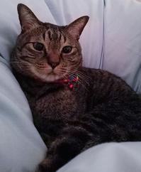 起きろよ - キジトラ猫のトラちゃんダイアリー