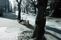 春の予感 - summicron