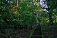 六殿-ねじれた樹木 - Mark.M.Watanabeの熊本撮影紀行