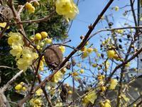 冬の花 - 工房もくきち・・・日々の暮らし
