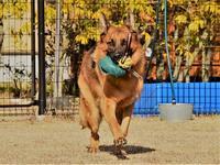 初心者が大型犬を飼う・運動編 - 徒然てんぐさ