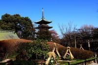 冬ぼたん上野東照宮 - お散歩写真     O-edo line