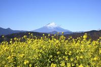 夢は雲のない富士山! - バリ島大好き