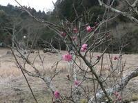 モズ、アカハラ、ツグミ。そして卵のうも - 千葉県いすみ環境と文化のさとセンター