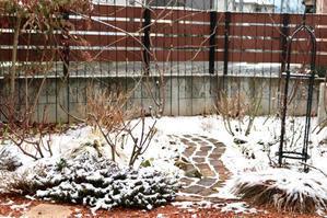 やっと寒肥を - my small garden~sugar plum~