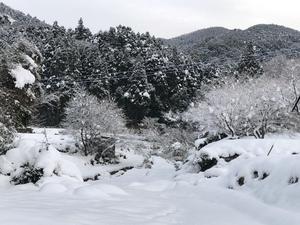 ◆秋月 1福岡県朝倉市秋月 - 空 sora そら