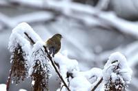 雪の朝 - 心のままに