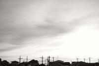 薄雲の朝 - S w a m p y D o g - my laidback life