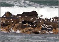 群れで行動しているミユビシギ - 野鳥の素顔 <野鳥と日々の出来事>