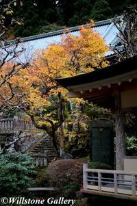 大雄山最乗寺_紅葉 - 花と風景の写真集_撮りたて花だより