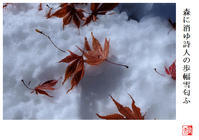 森に消ゆ詩人の歩幅有雪匂ふ - 風と光の散歩道、有希編2a