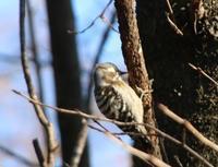 野鳥のパラダイス - 光りの音   photo gallery