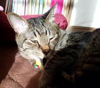 眩しい - キジトラ猫のトラちゃんダイアリー