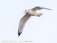 写真日記・お散歩探鳥(6)・2021.1.18 - ココカメラ【であいの・き】