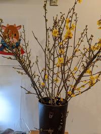 梅の花 - みんなのわが家はるかブログ