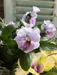 美しき園芸種 〜 ワイルドな土地にて - Gardener*s Diary