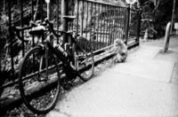 自転車と猿 - のっとこ